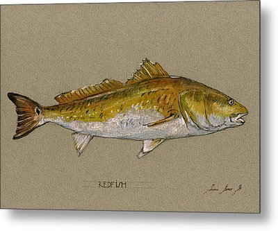 Redfish Painting  Metal Print by Juan  Bosco