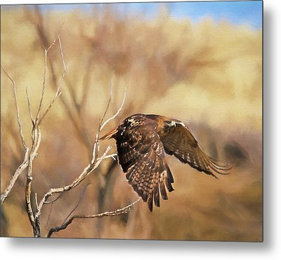 Redtail On The Move Metal Print by Donna Kennedy