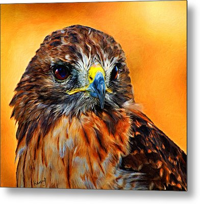 Redtailed Hawk Metal Print