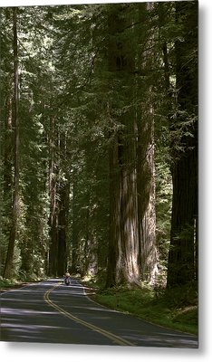 Redwood Highway Metal Print by Wes and Dotty Weber