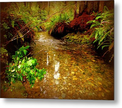 Redwood Stream Reflections Metal Print