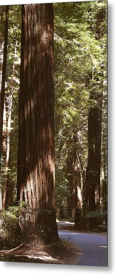 Redwoods Metal Print by Mike McGlothlen