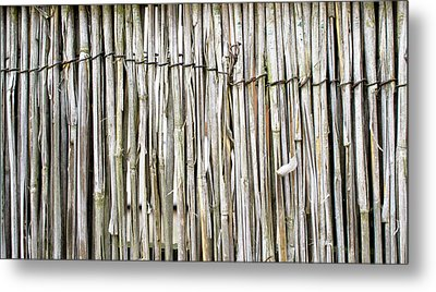 Reed Background Metal Print by Tom Gowanlock