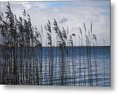 Metal Print featuring the photograph Reeds by Votus