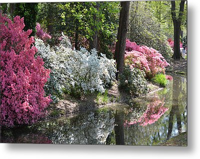 Metal Print featuring the photograph Reflecting Azaleas by Linda Geiger