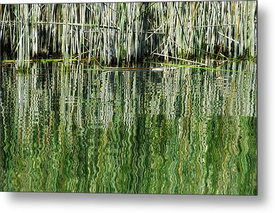 Reflecting Back Metal Print by Donna Blackhall