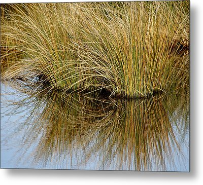 Reflecting Reeds Metal Print by Marty Koch