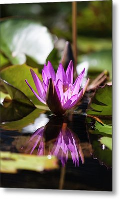Metal Print featuring the photograph Reflection In Fuchsia by Suzanne Gaff