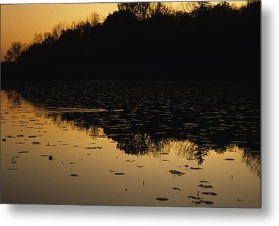 Reflection In The Water At Everglades Metal Print by Stacy Gold