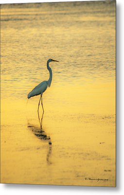 Reflection Metal Print by Marvin Spates