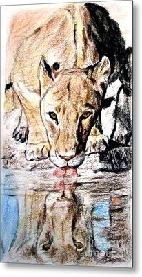 Reflection Of A Lioness Drinking From A Watering Hole Metal Print by Jim Fitzpatrick