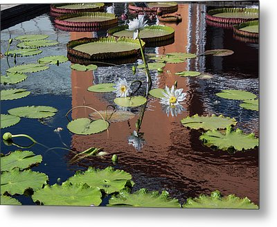 Reflections II Metal Print by Suzanne Gaff