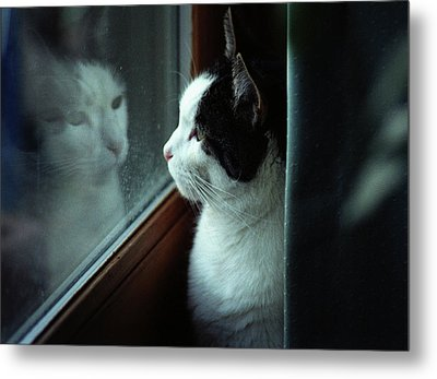 Reflections Of A Cat Metal Print