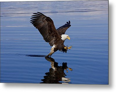 Reflections Of Eagle Metal Print