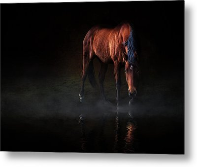 Metal Print featuring the photograph Reflections Of Wilma by Debby Herold