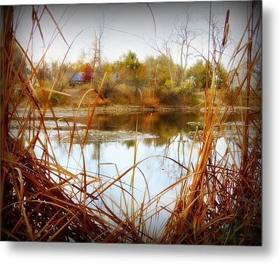 Reflections On A Pond -3 Metal Print