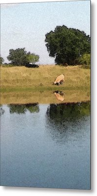 Reflective Cow Metal Print