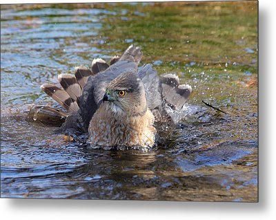 Metal Print featuring the photograph Refreshing Bath by Doris Potter