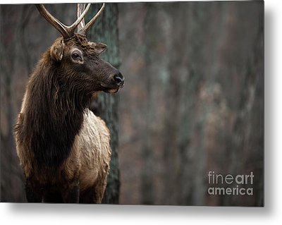 Regal Metal Print by Andrea Silies