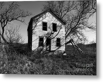 Regeneration Metal Print by Amanda Barcon