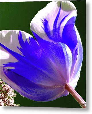 Reigning Tulips Metal Print by Christine Belt