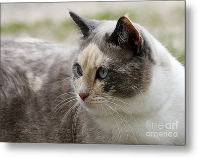 Metal Print featuring the photograph Relaxed by Teresa Zieba