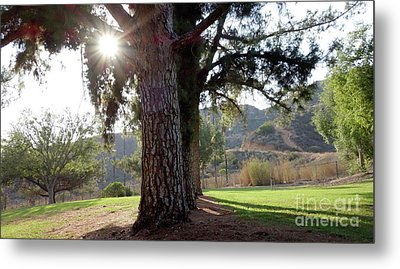 Relaxing In The Park Metal Print by Nina Prommer