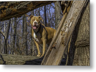 Remy In Tree Oil Paint More Pop Metal Print