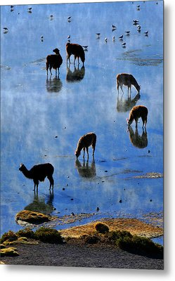 Metal Print featuring the photograph Rendezvous by Skip Hunt