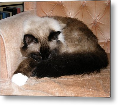 Metal Print featuring the photograph Repose by Votus