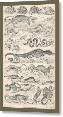 Reptiles Metal Print