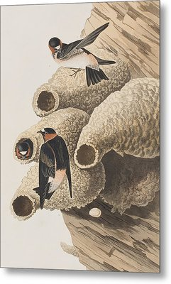 Republican Or Cliff Swallow Metal Print
