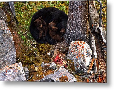 Resting After The Big Feast Metal Print by Adam Jewell