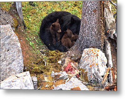 Resting After The Family Meal Metal Print by Adam Jewell