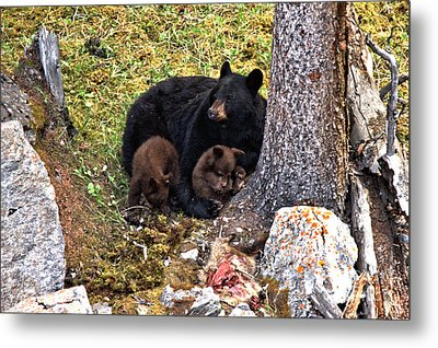 Resting After The Feast Metal Print by Adam Jewell