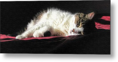 Resting Cat Metal Print by Maciek Froncisz
