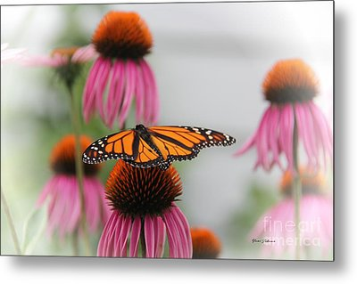 Resting Monarch Metal Print