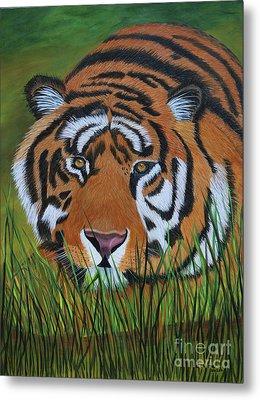 Resting Tiger  Metal Print by Myrna Walsh