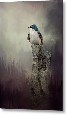 Resting Tree Swallow Metal Print by Jai Johnson