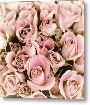 Reticent Rose Metal Print by Jessica Jenney