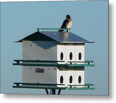 Return Of The Purple Martin Metal Print by Jerry Browning