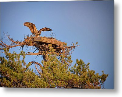 Metal Print featuring the photograph Returning To The Nest by Rick Berk