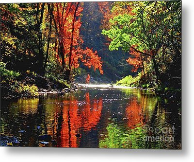 Revealed Metal Print by Sheila Ping