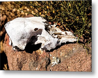 Reversal Of Fortune Metal Print