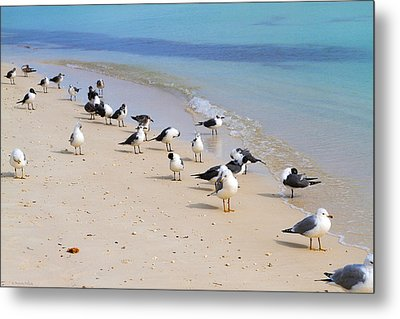 Rhapsody In Seabird Metal Print
