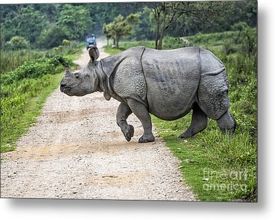 Rhino Crossing Metal Print