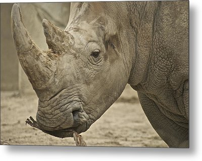 Rhino Metal Print by Michael Peychich