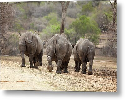 Rhino Trio Metal Print by Jane Rix