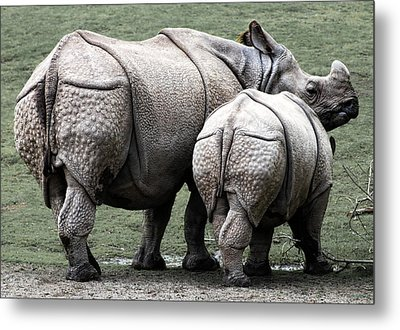 Rhinoceros Mother And Calf In Wild Metal Print by Daniel Hagerman