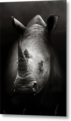 Rhinoceros Portrait Metal Print